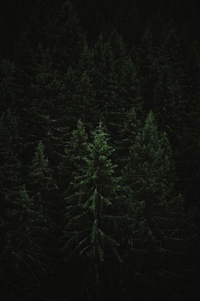 Weihnachtsbaumsorten