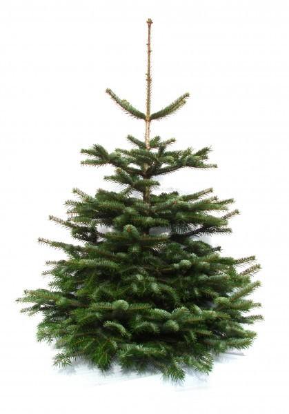 WeihnachtsbaumVeGCp6SkBrzfx